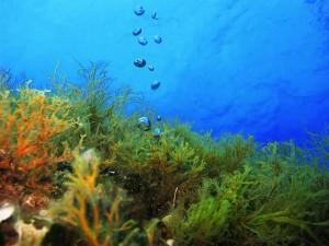 scuba diving halkidiki