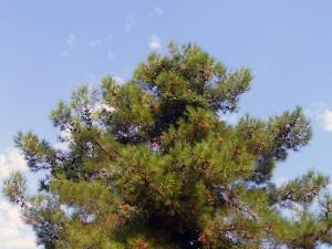 forest-halkidiki